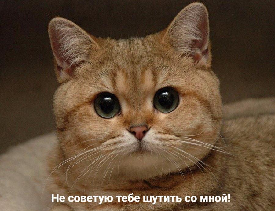 Что делать, если кот перекусил наушники